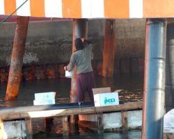 Protección de pilotes marinos en zona portuaria industrial